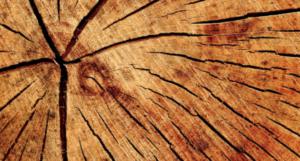 Bûche de bois