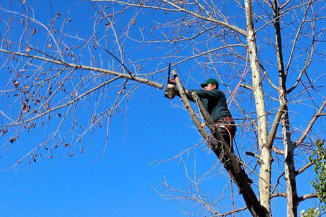 L'élagage : Une pratique nécessaire à la santé des arbres