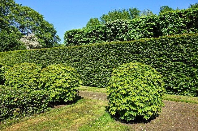 La taille facile de haies, le clin d'œil jardinage