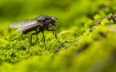 Astuces simples et efficaces pour éloigner les mouches de votre maison